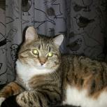 Отдам кота в хорошие руки, Новосибирск