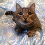 Молодой кот Боб (кастрат), Новосибирск