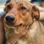 Собака Жучка мечтает обрести хозяина, Новосибирск