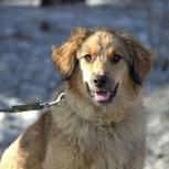 Собачка Жужа в дар, Новосибирск