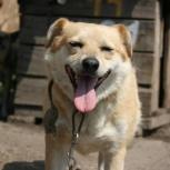 Солнечная Лина – собака, которая улыбается!, Новосибирск