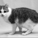 Потерялась кошка по улице одоевского, Новосибирск