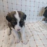 Маленькая Хельга, отдам собаку, Новосибирск