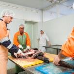 Продаётся действующее рыбоперерабатывающее производство, Новосибирск