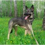 Клайд - очаровательный пёс, Новосибирск