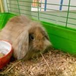 Продаётся кролик, Новосибирск