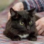 Очень красивая кошечка Вика ищет понимающих и терпеливых хозяев, Новосибирск