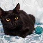 Ночка-стерилизованная кошка 2 года., Новосибирск