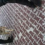 Метис авчарки на останоаке им мачковского, Новосибирск