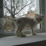 Гигиеническая стрижка животных, Новосибирск