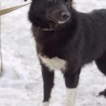 Красотка собака Нюша ищет дом, Новосибирск