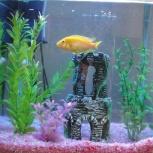 Продается готовый аквариум с рыбками, Новосибирск