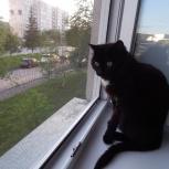 Ищу дом для кота, кот уже пережил предательство человека, Новосибирск