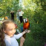 Развлекательные шоу-программы для активного отдыха, Новосибирск