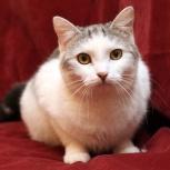Кот Витюша – нежный, ласковый, холеный мальчишечка, Новосибирск