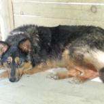 Потерялась собака ТИНА п.Железнодорожный. кто знает где она находится, Новосибирск