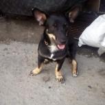 Пропала собака, Новосибирск