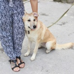 Собаки Алиса и Лорд в добрые руки, Новосибирск