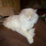 Прекрасное белое облако ждёт своих хозяев (кот), Новосибирск