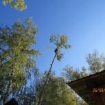 Пилим аварийные, проблемные деревья любой сложности, Новосибирск