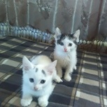 Отдадим котят в добрые руки, Новосибирск