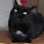 Спокойная, дружелюбная Пума – кошка-друг и компаньон, Новосибирск