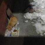 Найден рыжий котейка, Новосибирск