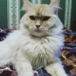 Заботливая передержка для кошек, Новосибирск