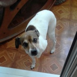 Потерялась собака, Октябрьский район, Новосибирск