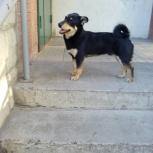Нашлась собака!, Новосибирск