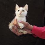 Котята. Никому не нужные крошки  3 месяца, Новосибирск