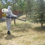Дезинсекция. Уничтожение муравьев профессиональной химией, Новосибирск