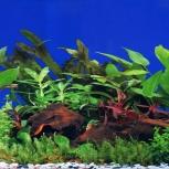 Фон для аквариума, Новосибирск