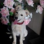 Отдаю в добрые руки щенка, Новосибирск