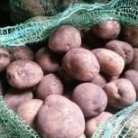 Продам картофель деревенский без химии с доставкой до подъезда, Новосибирск
