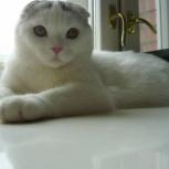 Котик ищет жену, Новосибирск