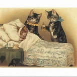 Передержка кошек с ветеринарным уходом, Новосибирск