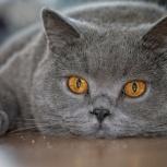 Кот на вязку, Новосибирск