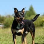 Цезарь – активный пёс для активных хозяев!, Новосибирск