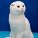 Котик для вязки, Новосибирск