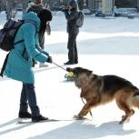 Выгул собак!, Новосибирск