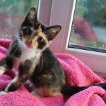 Крошка Черепашка ищет дом! котенок, Новосибирск