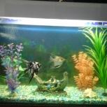 Продам аквариум на 180 литров с рыбами и всем комплектующим!, Новосибирск