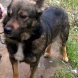 Пёс Тёма ищет хозяина-друга, Новосибирск