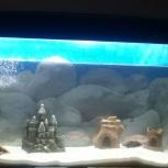 Продам аквариум 240 л, Новосибирск