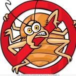 Обработка клопов. Уничтожение муравьев клопов. Тараканов. Клопов блох, Новосибирск