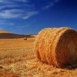 Продам пшеницу овес комбикорм сено., Новосибирск