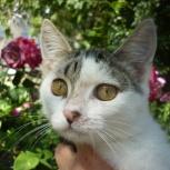 Лора-кошечка-котенок 3-4 месяца, Новосибирск