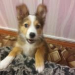 Даром отдам в хорошие руки в частный дом собачку, Новосибирск