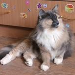 Нарядная красотка-кошка, Новосибирск